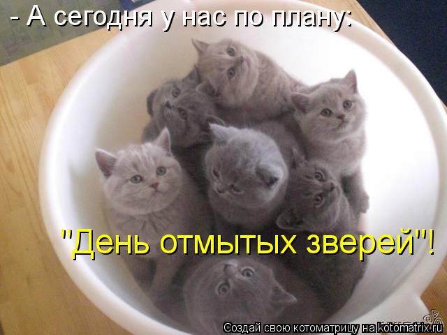 """Котоматрица: - А сегодня у нас по плану: """"День отмытых зверей""""!"""