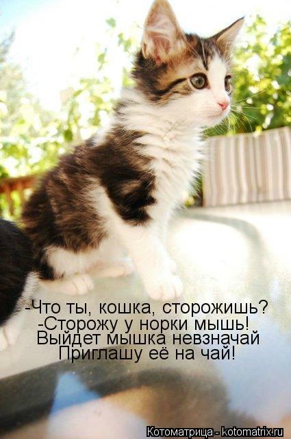 Котоматрица: -Что ты, кошка, сторожишь? -Сторожу у норки мышь! Выйдет мышка невзначай Приглашу её на чай!