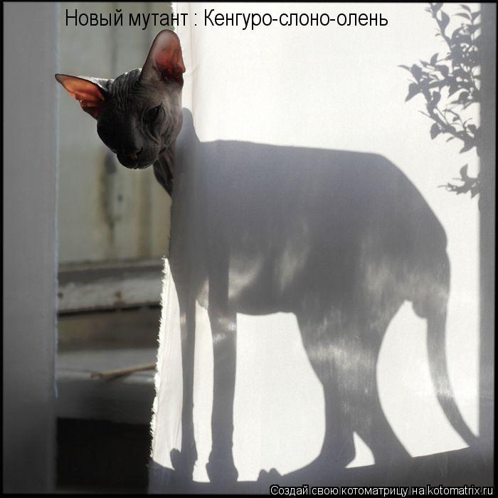 Котоматрица: Новый мутант : Кенгуро-слоно-олень