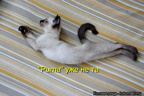 "Котоматрица: ""Puma"" уже не та"