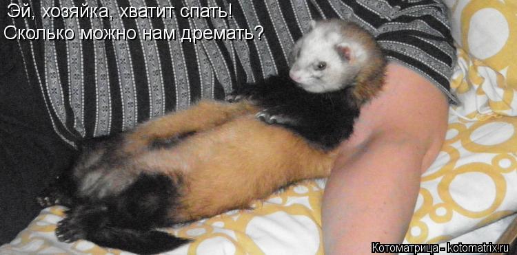 Котоматрица: Эй, хозяйка, хватит спать! Сколько можно нам дремать?