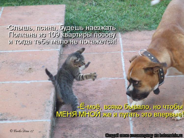 http://kotomatrix.ru/images/lolz/2012/10/02/kotomatritsa_Z6.jpg