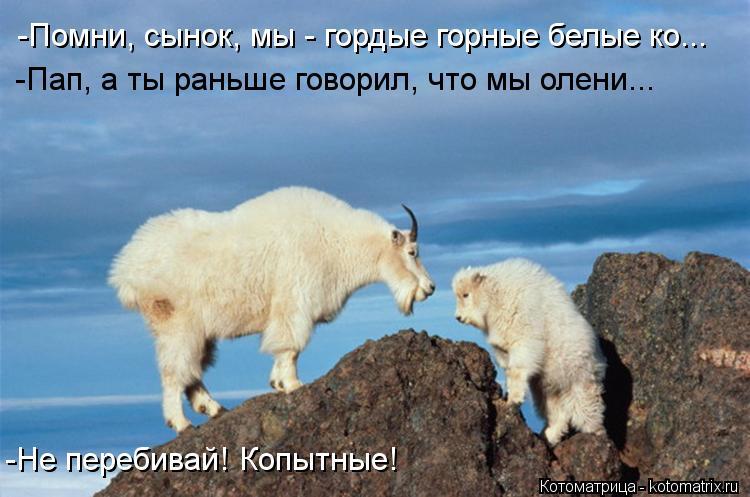 Котоматрица: -Помни, сынок, мы - гордые горные белые ко... -Пап, а ты раньше говорил, что мы олени... -Не перебивай! Копытные!