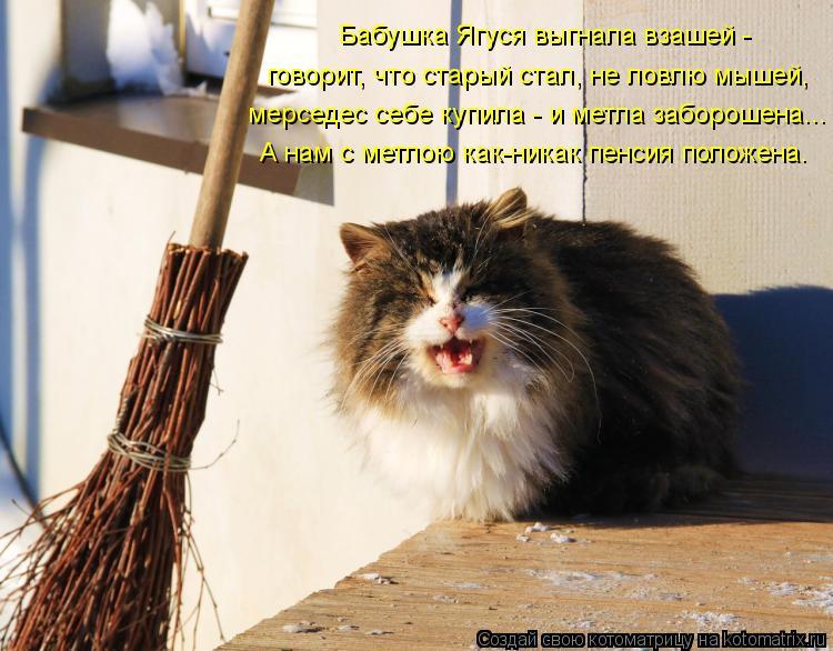 Котоматрица: говорит, что старый стал, не ловлю мышей, Бабушка Ягуся выгнала взашей - мерседес себе купила - и метла заборошена... А нам с метлою как-никак п