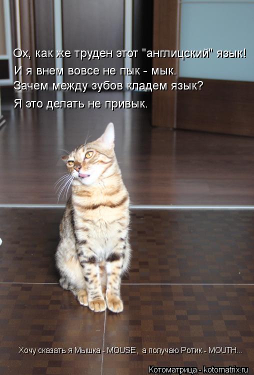 """Котоматрица: Ох, как же труден этот """"англицский"""" язык! И я внем вовсе не пык - мык. Зачем между зубов кладем язык? Я это делать не привык. Хочу сказать я Мышк"""