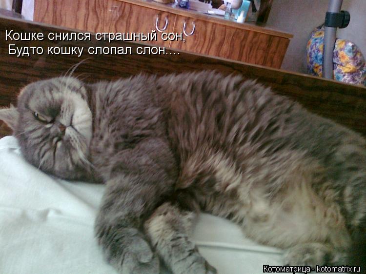 Котоматрица: Кошке снился страшный сон, Будто кошку слопал слон....