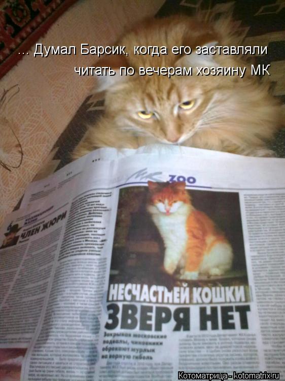 Котоматрица: ... Думал Барсик, когда его заставляли читать по вечерам хозяину МК