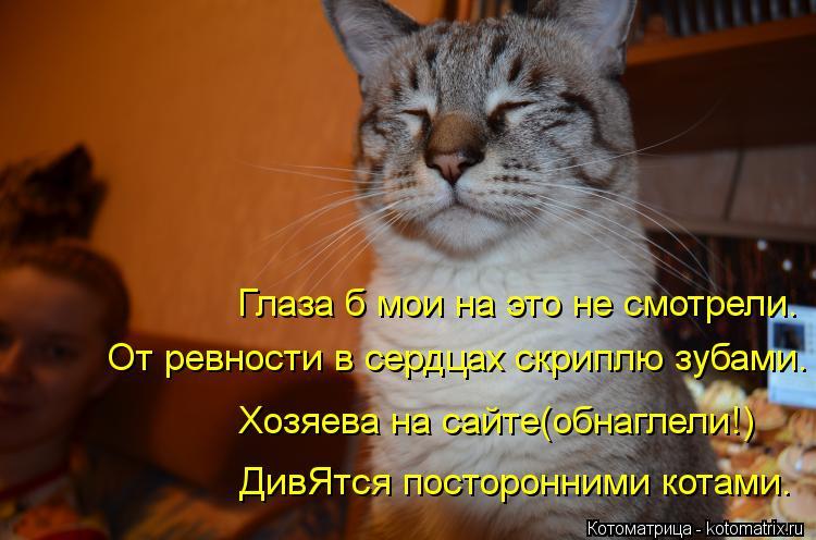 Котоматрица: Глаза б мои на это не смотрели. От ревности в сердцах скриплю зубами. Хозяева на сайте(обнаглели!) ДивЯтся посторонними котами.