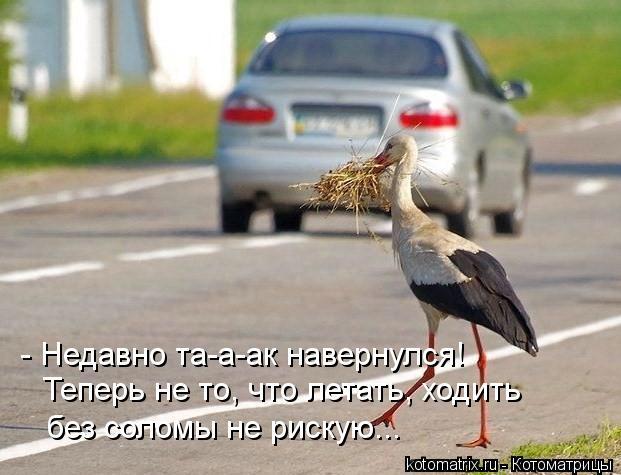 Котоматрица: - Недавно та-а-ак навернулся! Теперь не то, что летать, ходить без соломы не рискую...