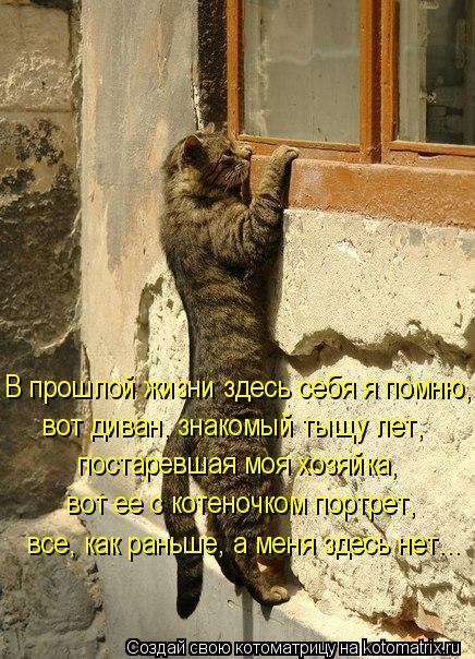 Котоматрица: В прошлой жизни здесь себя я помню, вот диван, знакомый тыщу лет, постаревшая моя хозяйка, вот ее с котеночком портрет, все, как раньше, а меня