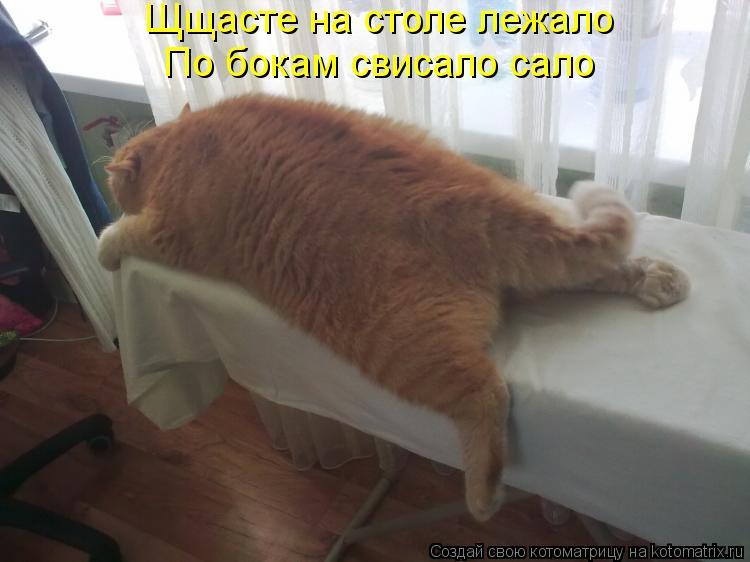 Котоматрица: Щщасте на столе лежало По бокам свисало сало