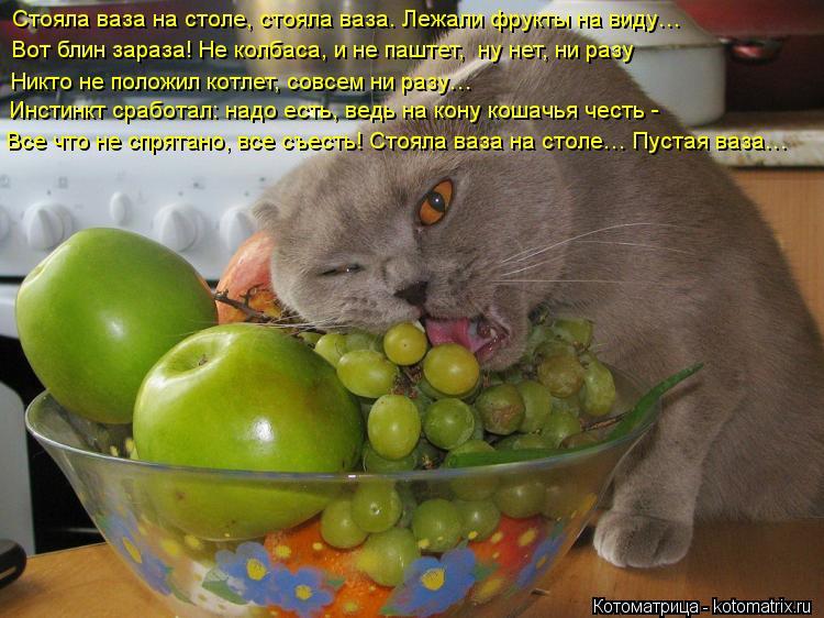 Котоматрица: Стояла ваза на столе, стояла ваза. Лежали фрукты на виду… Вот блин зараза! Не колбаса, и не паштет,  ну нет, ни разу  Никто не положил котлет, с