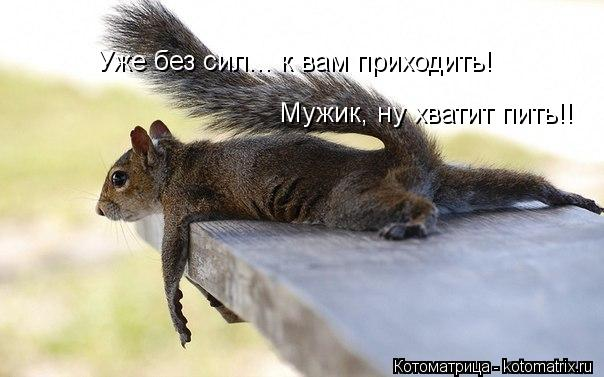 Котоматрица: Уже без сил... к вам приходить! Мужик, ну хватит пить!!