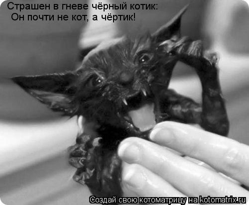 Котоматрица: Страшен в гневе чёрный котик: Он почти не кот, а чёртик!