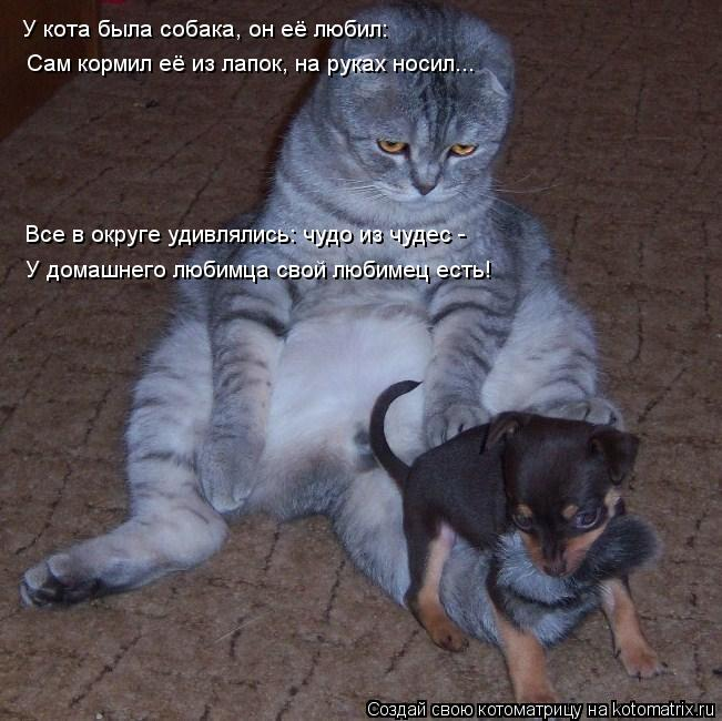 Котоматрица: У кота была собака, он её любил: Сам кормил её из лапок, на руках носил... Все в округе удивлялись: чудо из чудес -  У домашнего любимца свой люб