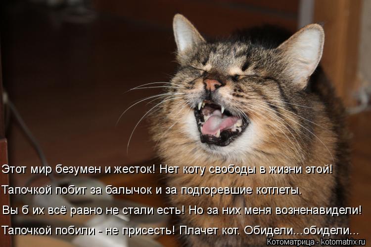 Котоматрица: Тапочкой побили - не присесть! Плачет кот. Обидели...обидели... Вы б их всё равно не стали есть! Но за них меня возненавидели! Тапочкой побит за