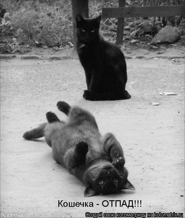 Котоматрица: Кошечка - ОТПАД!!!