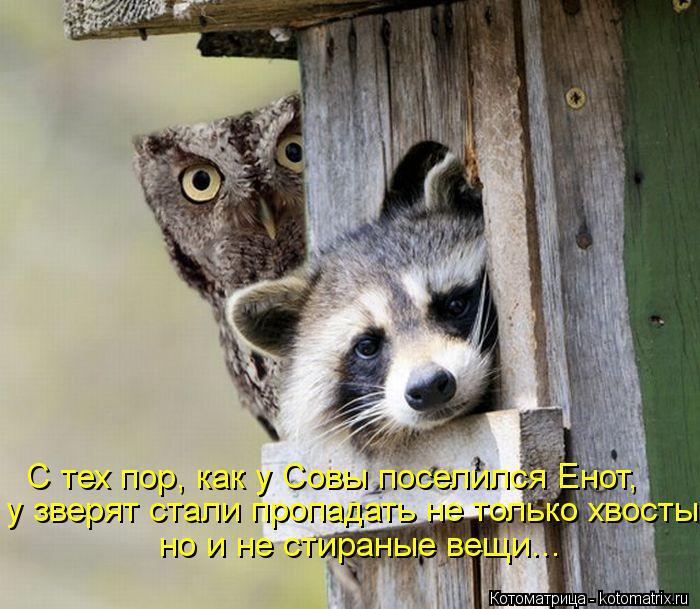 Котоматрица: С тех пор, как у Совы поселился Енот, у зверят стали пропадать не только хвосты, но и не стираные вещи...