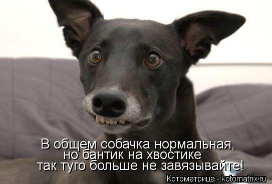 Котоматрица: В общем собачка нормальная, но бантик на хвостике  так туго больше не завязывайте!