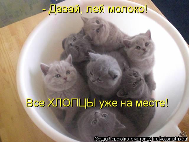 Котоматрица: - Давай, лей молоко! Все ХЛОПЦЫ уже на месте!
