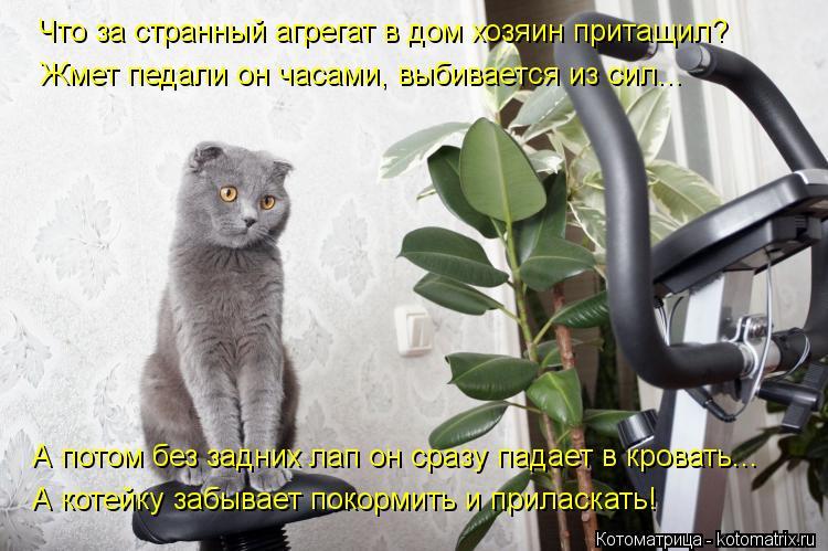 Котоматрица: Что за странный агрегат в дом хозяин притащил? Жмет педали он часами, выбивается из сил... А потом без задних лап он сразу падает в кровать... А