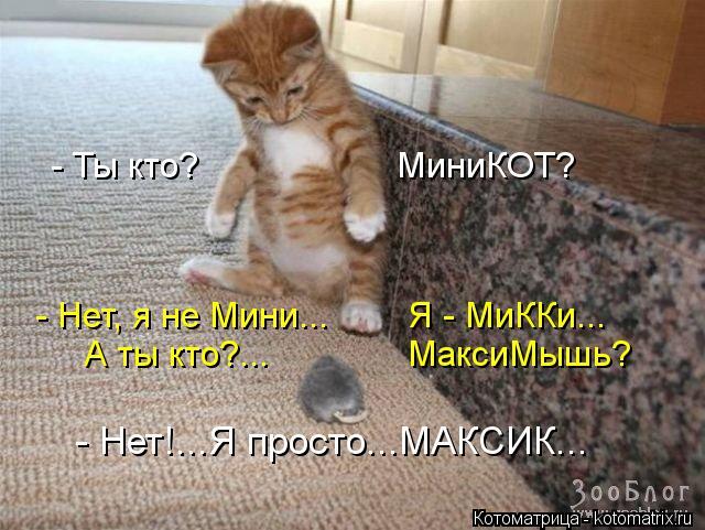 Котоматрица: - Ты кто?                    МиниКОТ? - Нет, я не Мини...        Я - МиККи... А ты кто?...              МаксиМышь? - Нет!...Я просто...МАКСИК...