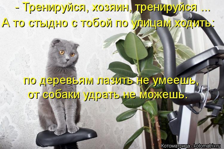 Котоматрица: - Тренируйся, хозяин, тренируйся ... А то стыдно с тобой по улицам ходить: по деревьям лазить не умеешь, от собаки удрать не можешь.