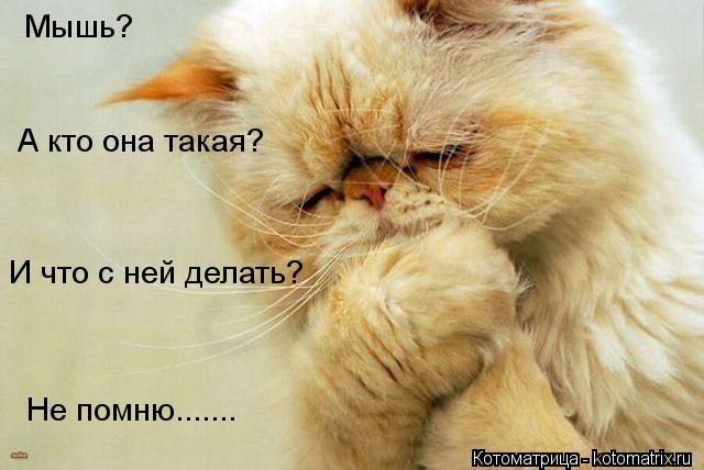 Котоматрица: Мышь? А кто она такая? И что с ней делать? Не помню.......