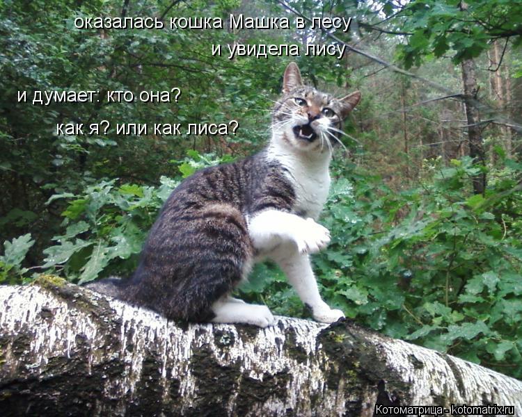 Котоматрица: оказалась кошка Машка в лесу и увидела лису и думает: кто она? как я? или как лиса?