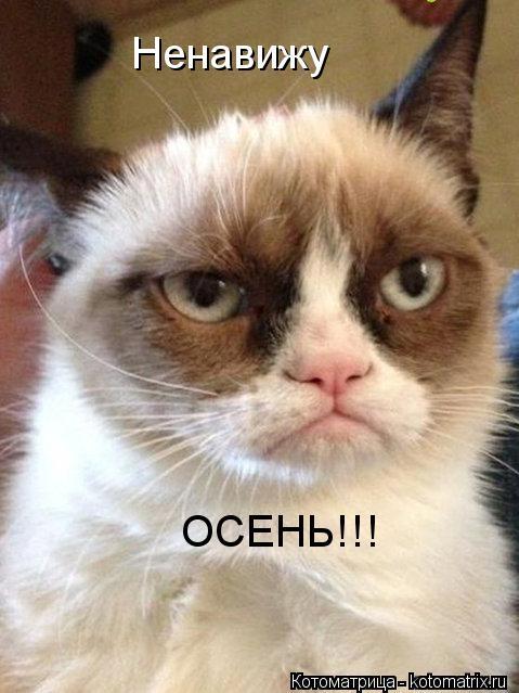 Котоматрица: Ненавижу ОСЕНЬ!!!