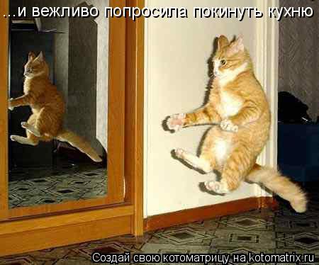 Котоматрица: ...и вежливо попросила покинуть кухню