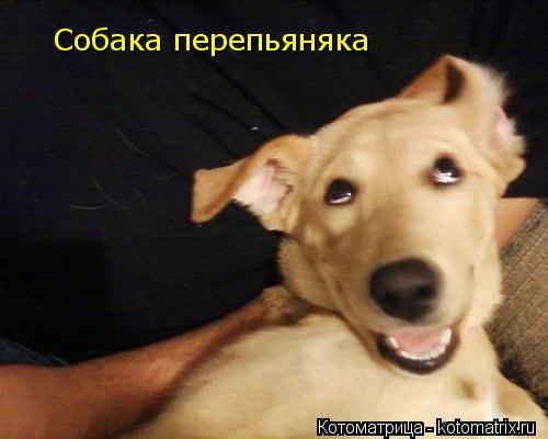 Котоматрица: Собака перепьяняка