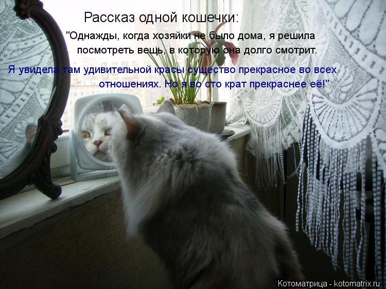 """Котоматрица: Рассказ одной кошечки: """"Однажды, когда хозяйки не было дома, я решила  посмотреть вещь, в которую она долго смотрит. Я увидела там удивительн"""