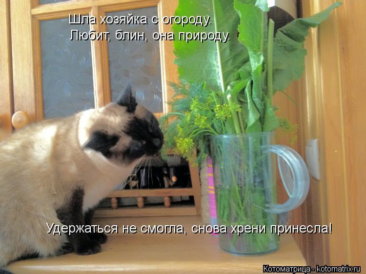 Котоматрица: Шла хозяйка с огороду. Любит, блин, она природу. Удержаться не смогла, снова хрени принесла!