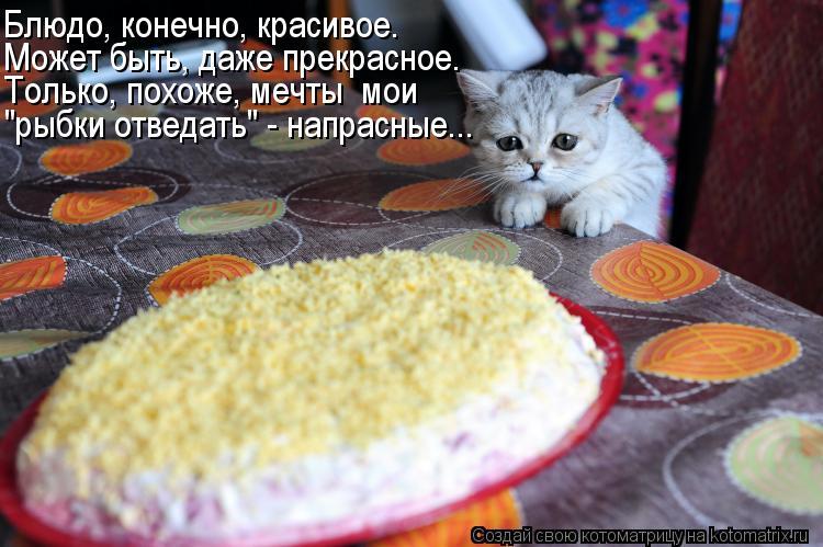 """Котоматрица: Может быть, даже прекрасное. Блюдо, конечно, красивое. Только, похоже, мечты  мои """"рыбки отведать"""" - напрасные..."""