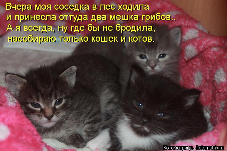 Котоматрица: Вчера моя соседка в лес ходила и принесла оттуда два мешка грибов.. А я всегда, ну где бы не бродила, насобираю только кошек и котов.