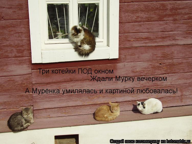 Котоматрица: Три котейки ПОД окном Ждали Мурку вечерком  А Мурёнка умилялась и картиной любовалась!