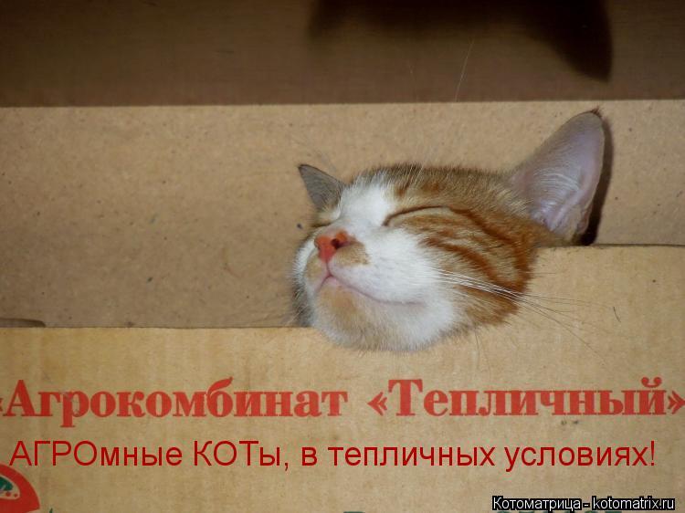 Котоматрица: АГРОмные КОТы, в тепличных условиях!