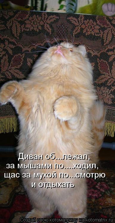 Котоматрица: Диван об...лежал, щас за мухой по...смотрю и отдыхать за мышами по....ходил,