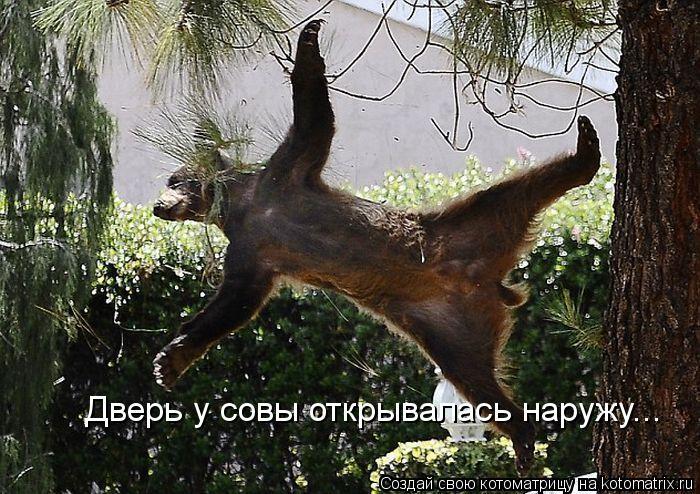 Котоматрица: Дверь у совы открывалась наружу...