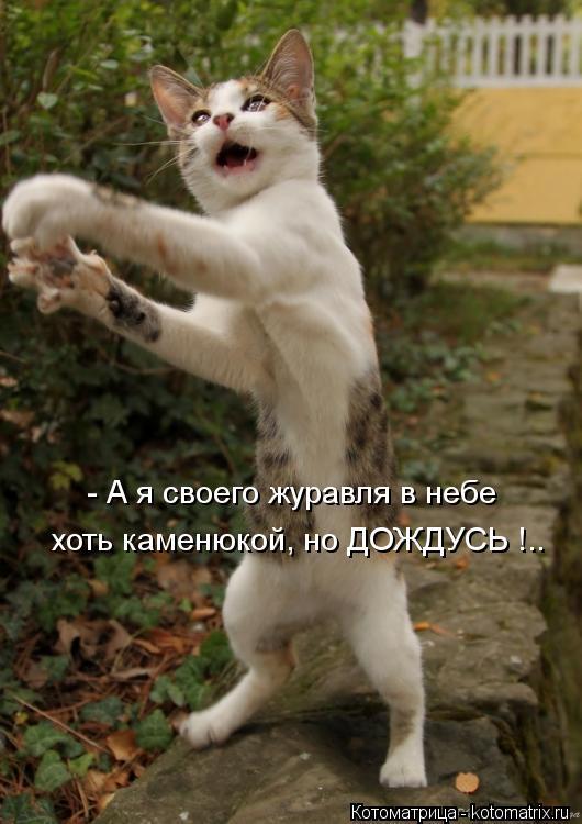 Котоматрица: - А я своего журавля в небе хоть каменюкой, но ДОЖДУСЬ !..