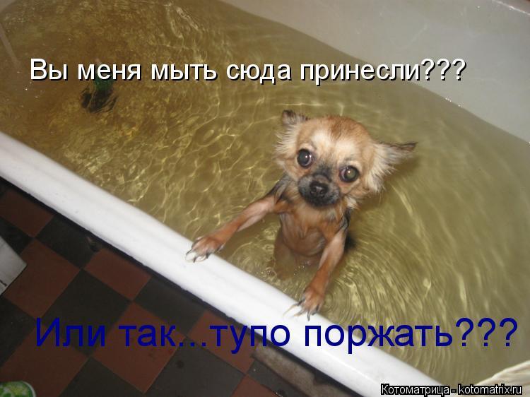 Котоматрица: Вы меня мыть сюда принесли??? Или так...тупо поржать???