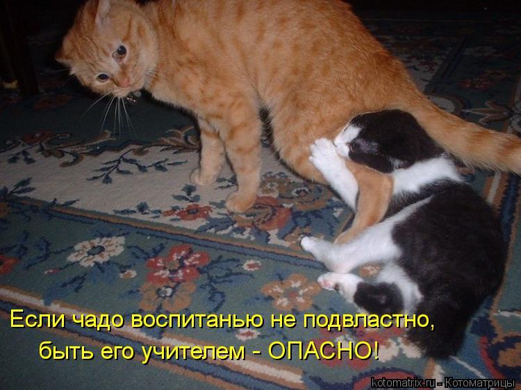 Котоматрица: Если чадо воспитанью не подвластно, быть его учителем - ОПАСНО!