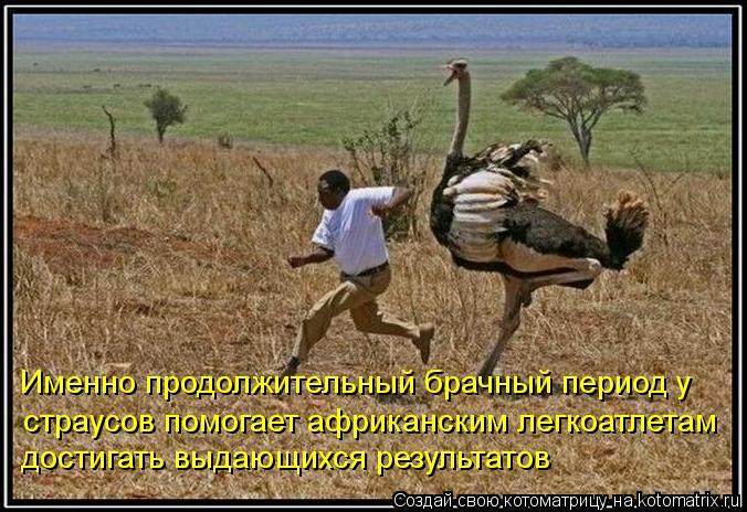 Котоматрица: Именно продолжительный брачный период у  страусов помогает африканским легкоатлетам достигать выдающихся результатов