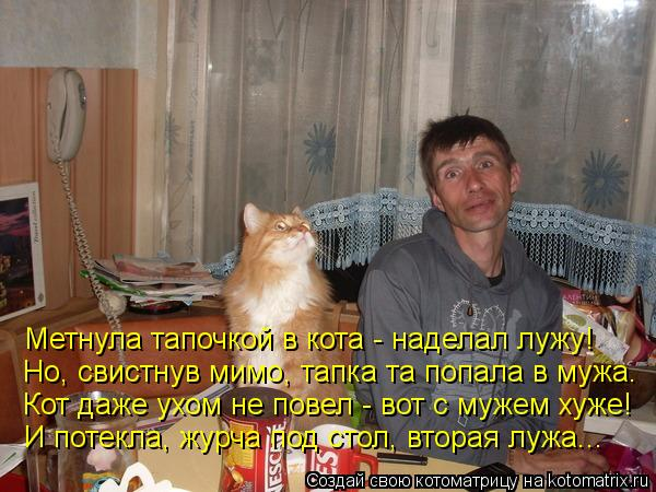 Котоматрица: Метнула тапочкой в кота - наделал лужу! Но, свистнув мимо, тапка та попала в мужа. Кот даже ухом не повел - вот с мужем хуже! И потекла, журча по