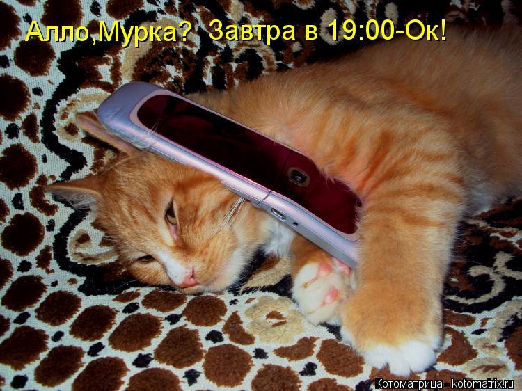 Котоматрица: Алло,Мурка? Завтра в 19:00-Ок!