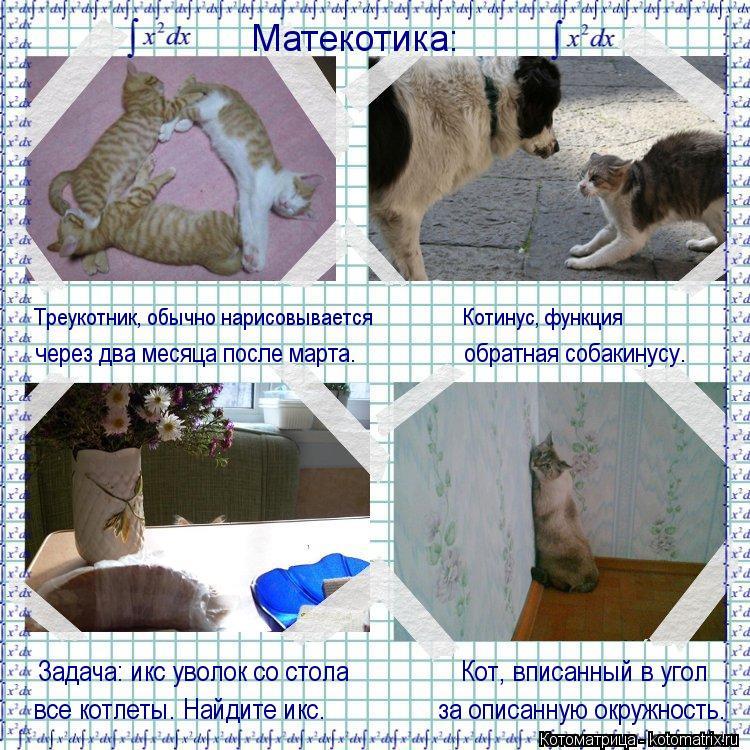 Котоматрица: Матекотика: Треукотник, обычно нарисовывается                  Котинус, функция через два месяца после марта.                  обратная собакинусу. Задач