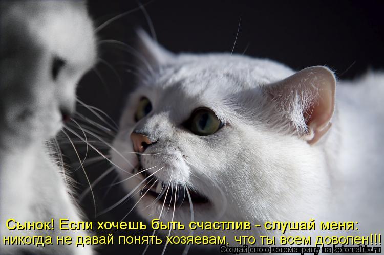 Котоматрица: Сынок! Если хочешь быть счастлив - слушай меня: никогда не давай понять хозяевам, что ты всем доволен!!!