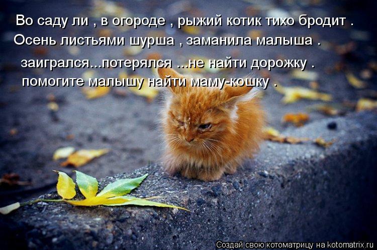 Котоматрица: Bо саду ли , в огороде , рыжий котик тихо бродит . Oсень листьями шурша , заманила малыша .  заигрался...потерялся ...не найти дорожку .  помогите м