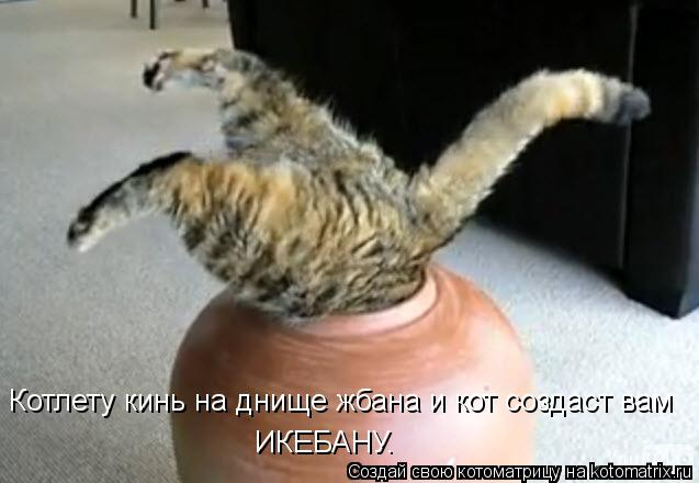 Котоматрица: Котлету кинь на днище жбана и кот создаст вам ИКЕБАНУ.